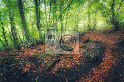 Autumn forest with trail in fog. Dreamy landscape with beautiful enchanted trees with green and red leaves in fall. Amazing scene with mystical foggy forest. Fairy wood. Nature. Colorful colors