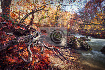 Autumn sunrise in the beautiful forest at the river