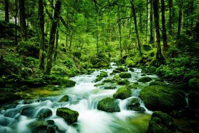 Bild Bach im Wald