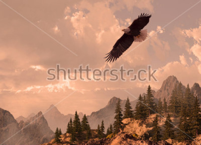 Bild Bald eagle soaring in the Rocky Mountain high country.