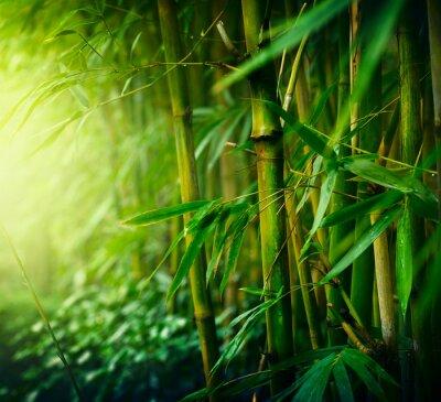 Bild Bamboo