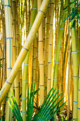 Bild Bamboo forest. Natural background. bamboo plant