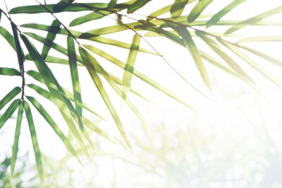 Bild Bamboos Forest or bamboo foliage and sunlight and space for text