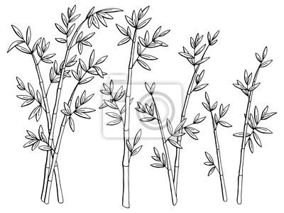 Bambus Pflanze Grafik Schwarz Weiss Isoliert Skizze Illustration