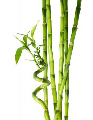 Bambus - sechs Stiele
