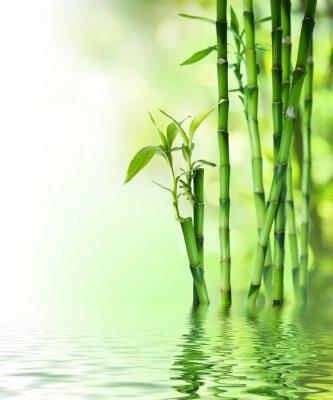 Bambusstangen auf dem Wasser