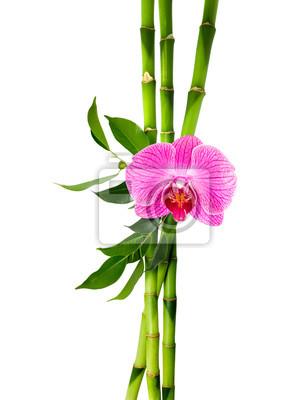 Bambusstangen mit lila Orchidee