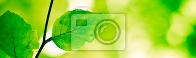 Bild banner serie - grünen Natur Hintergrund mit Ast