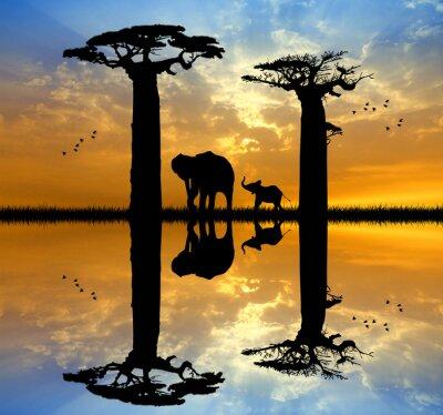 Bild Baobab und Elefant bei Sonnenuntergang