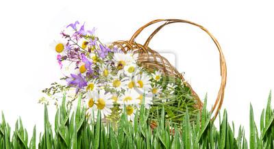 Bild basket with wild flowers - white background
