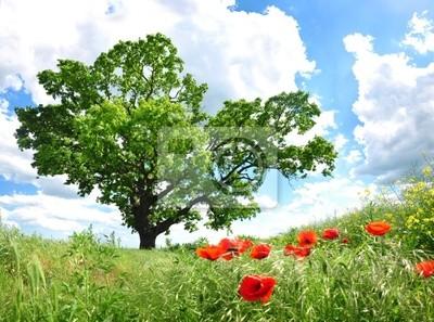 Baum und Mohn