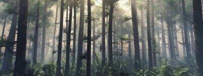 Bild Bäume im Nebel.  Der Rauch im Wald am Morgen.  Ein nebliger Morgen zwischen den Bäumen.  3D-Rendering