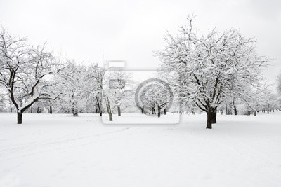 Bild Bäume im Park im Winter Tag