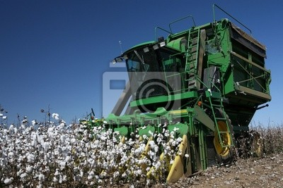 Bild Baumwollfeldern
