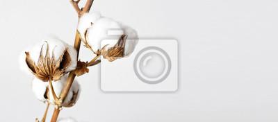Bild Baumwollzweig auf weißem Hintergrund.  Zarte weiße Baumwollblumen.  Heller Baumwollhintergrund, flache Lage.