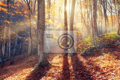 Beautiful autumn sunset in the forest