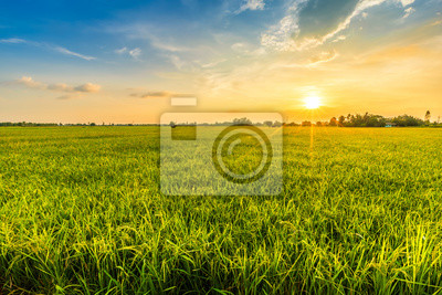 Bild Beautiful environment landscape of green field cornfield or corn in Asia country agriculture harvest with sunset sky background.