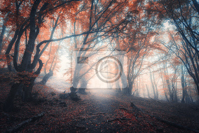 Beautiful fairy forest in fog in autumn. Colorful landscape with enchanted trees with orange and red leaves on the branches. Scenery with path in dreamy foggy forest. Fall colors in october. Nature