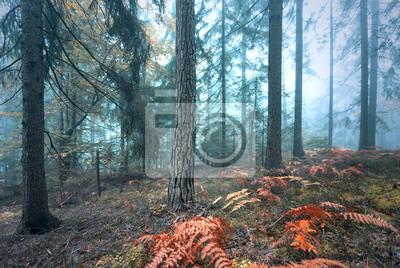 Beautiful foggy autumn season colored forest landscape.