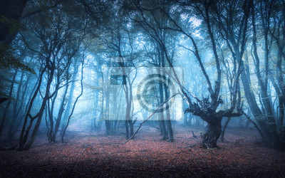 Beautiful forest in blue fog at dusk in autumn. Colorful landscape with enchanted trees with orange and red leaves. Scenery with path in dreamy foggy forest in fall. Autumn colors in october. Nature