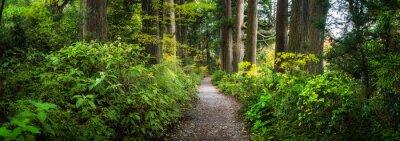 Bild Beautiful forest path as panorama background