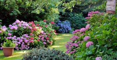 Bild Beautiful garden with hydrangeas in Brittany