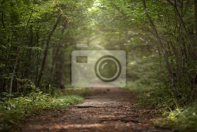 Bild Beautiful green summer forest. Spring background, backdrop