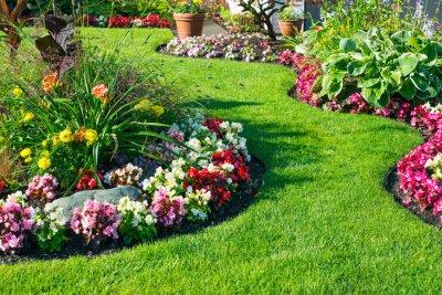 Bild Beautiful home garden in full bloom