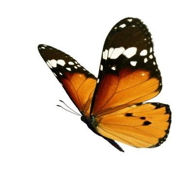 Bild Beautiful monarch butterfly