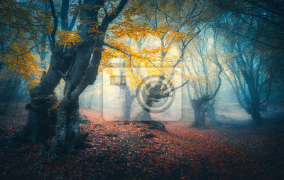 Beautiful mystical forest in blue fog at sunrise in autumn. Colorful landscape with enchanted trees with orange and red leaves. Scenery with path in dreamy foggy forest. Fall colors in october. Nature