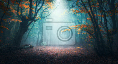 Bild Beautiful mystical forest in blue fog in autumn. Colorful landscape with enchanted trees with orange and red leaves. Scenery with path in dreamy foggy forest. Fall colors in october. Nature background