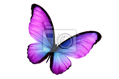 Bild beautiful purple butterfly isolated on white background