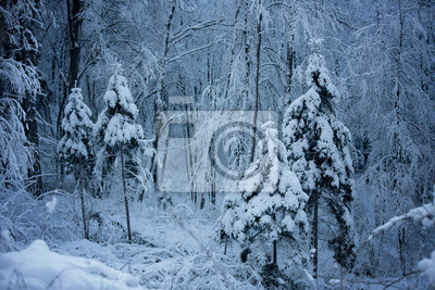 Beautiful snowy winter forest landscape. Blue color tone used.