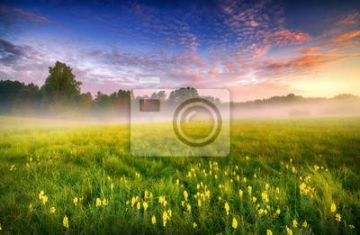 Bild Beautiful summer foggy morning landscape