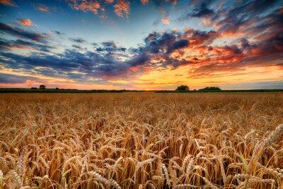 Bild Beautiful summer sunrise over wheat fields