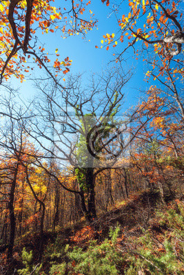 Beautiful tree. Autumn evening in the forest