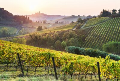 Bild Beautiful valley in Tuscany, Italy. Vineyards and landscape with San Gimignano town at the background.