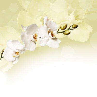 Bild Beautiful white orchid