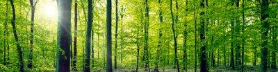 Bild Beech forest panorama landscape