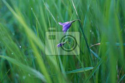 Bell Blume im Gras