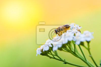 Bild Biene auf einer Blume im Frühling Tag
