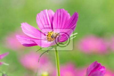 Bild Biene und Blume