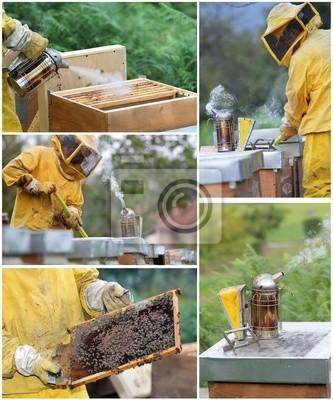Bienenzucht Collage