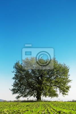 Big Green Tree