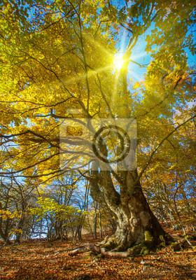 Big Herbst Baum
