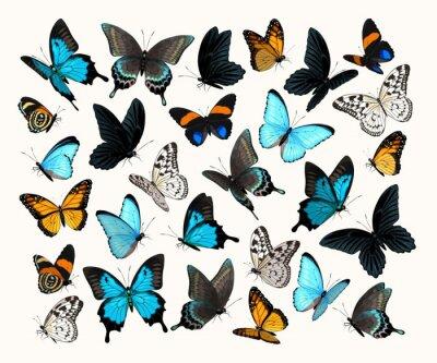 Bild Big vector set of high detailed butterflies