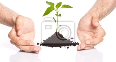 Bild Bild von Männern, die eine Pflanze zwischen den Händen