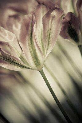 Bild Bildende Kunst der Nahaufnahme Tulpen, unscharfen und scharfen