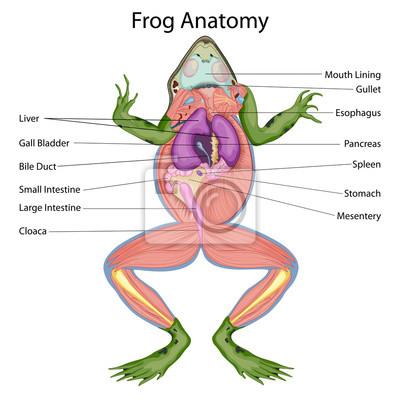 Bildungsdiagramm der biologie für zerkleinerte körper des ...