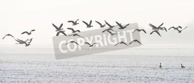 Bild Birds flying over a snowy field in winter